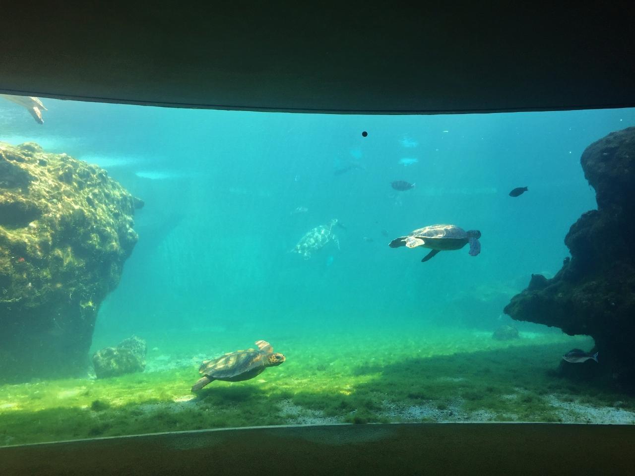 Les tortues marines de kélonia à la Réunion