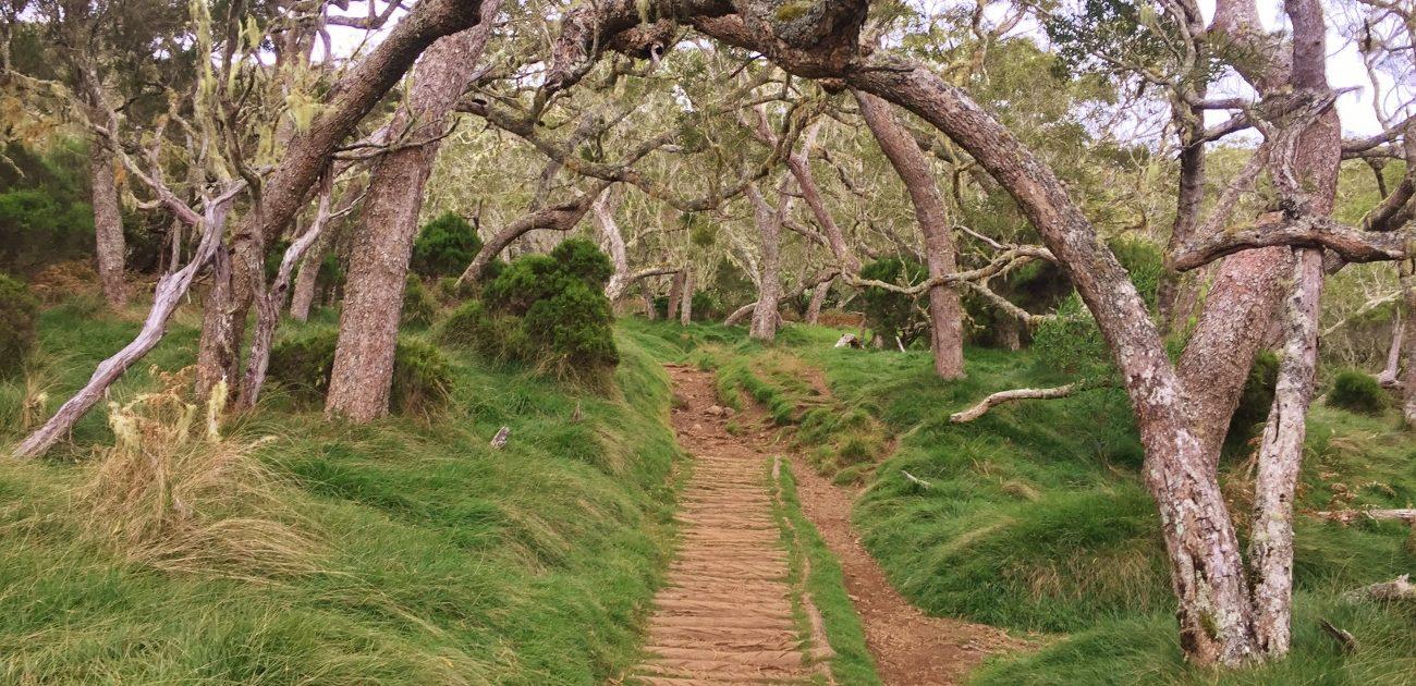 Randonnée dans le cirque de Mafate : la plaine des Tamarins