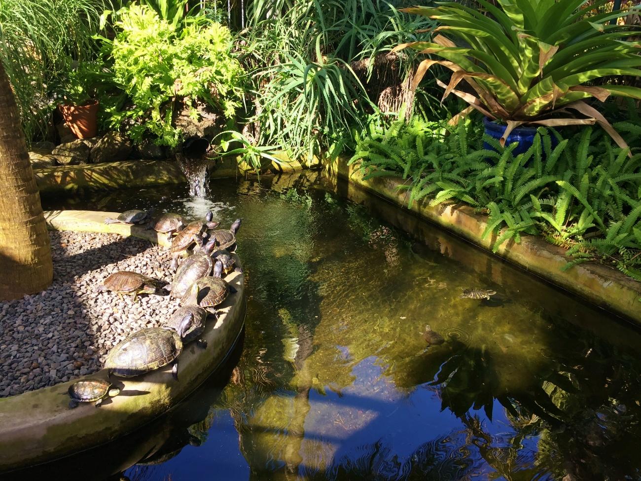Le jardin des tortues terrestres et aquatiques