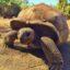 le jardin des tortues et la tortue géante des Seychelles
